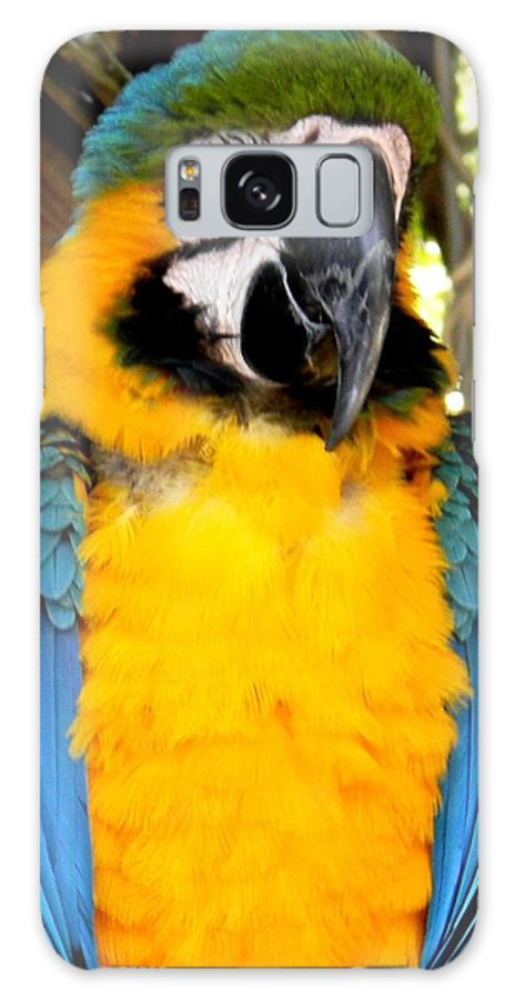 Parrot Nature Galaxy S8 Case featuring the photograph Parrot II by Bruce Kessler