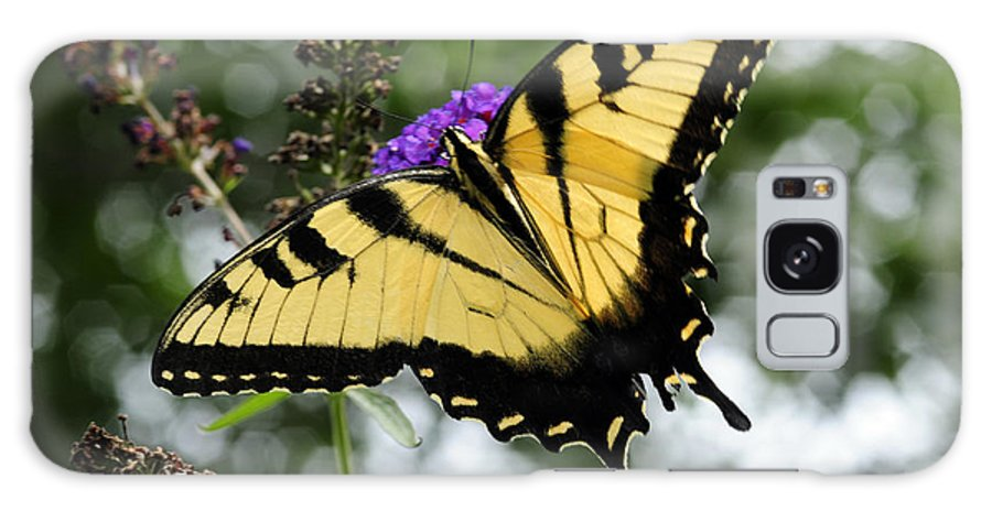 Swallowtail Butterfly Galaxy S8 Case featuring the photograph Party Paint by Wanda Brandon