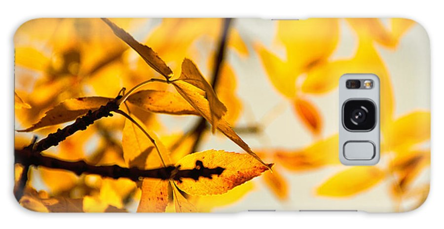 Fall Colors Galaxy S8 Case featuring the photograph Past Present And Future by Kunal Mehra