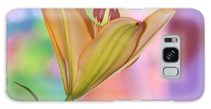Flowers Galaxy S8 Case featuring the photograph Pastels by Tami Rounsaville