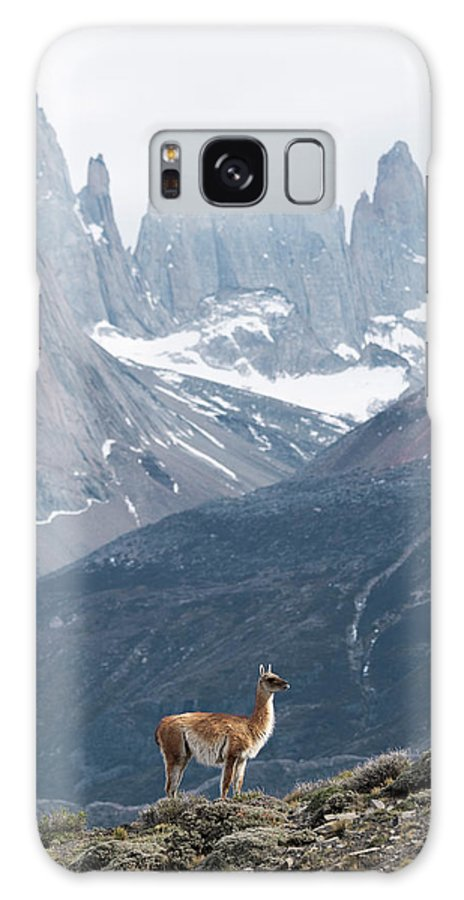 Guanaco Galaxy S8 Case featuring the photograph Patagonian Landscape And Guanaco by Dr P. Marazzi/science Photo Library