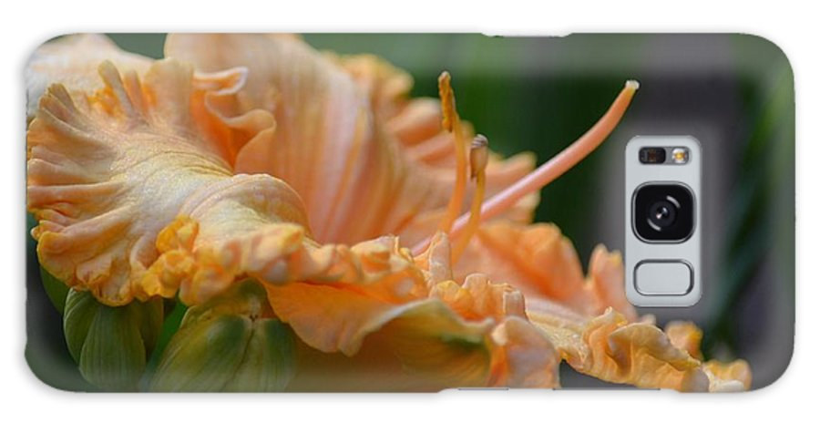 Peach Ruffette - Lily Galaxy S8 Case featuring the photograph Peach Rufflette - Lily by Maria Urso