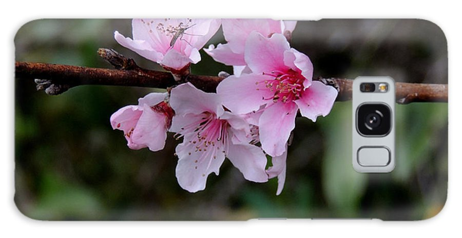 Digital Photography Galaxy S8 Case featuring the photograph Peach Tree Blooms Miskitos Swoon by Kim Pate
