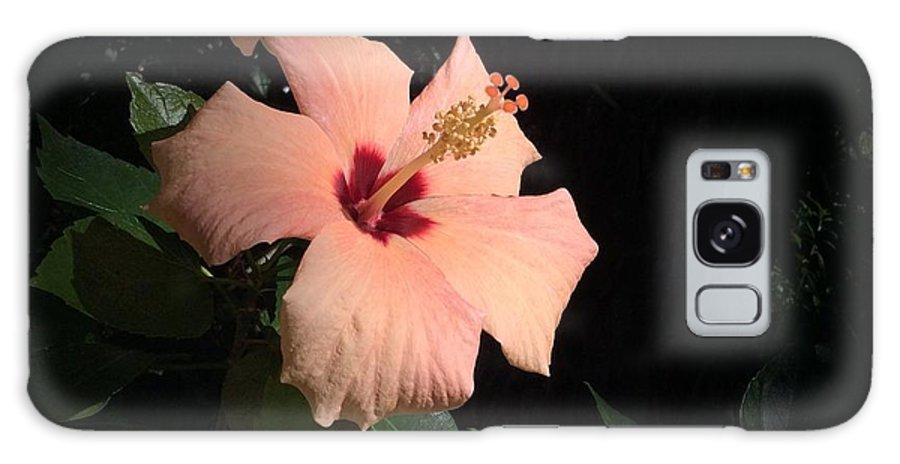 Nature Galaxy S8 Case featuring the photograph Peachy Hibiscus by Donna Spencer