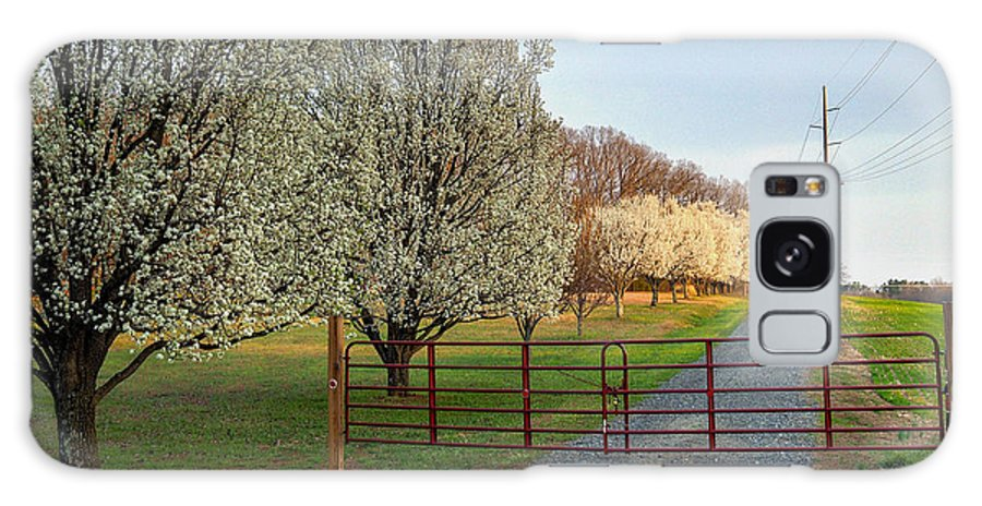 Landscape Galaxy S8 Case featuring the photograph Pear Tree Blossoms In The Carolinas by Maurice Smith