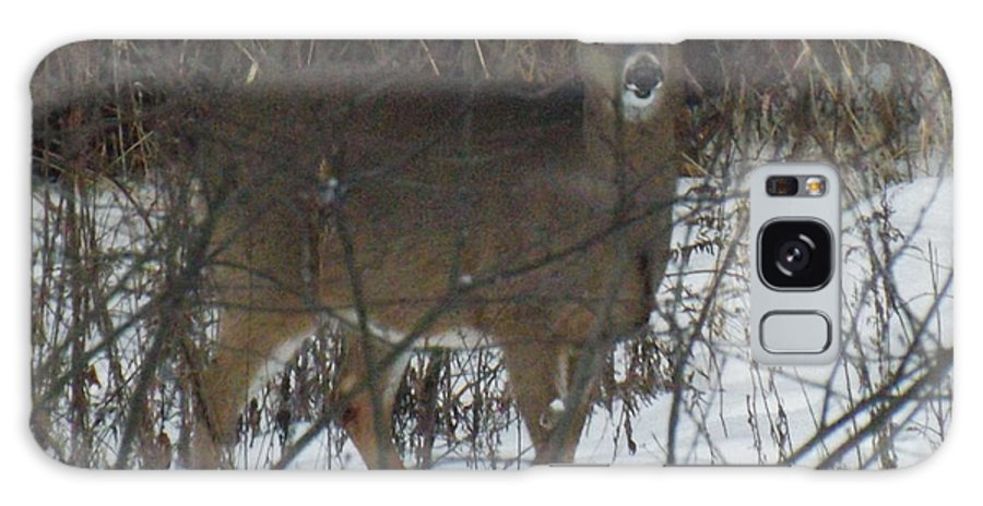 Wildlife Galaxy S8 Case featuring the photograph Peek A Boo Deer by Brenda Brown