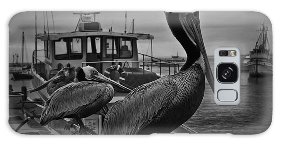 Pelican Galaxy S8 Case featuring the photograph Pelican On Pier by Moore Design