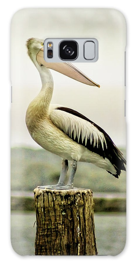 Animlas Galaxy S8 Case featuring the photograph Pelican Poise by Holly Kempe
