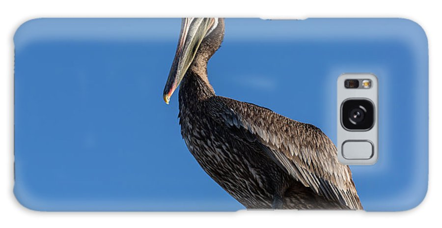 California Galaxy S8 Case featuring the photograph Pelican Watch by John Daly