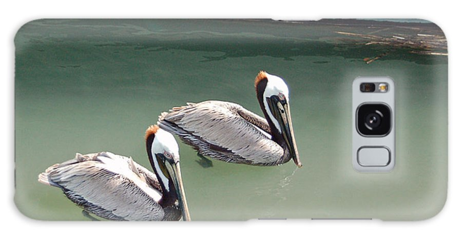 Brown Pelican Galaxy Case featuring the photograph Pelicans Partners by Suzanne Gaff