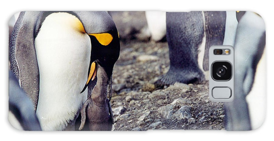 Penguin Galaxy S8 Case featuring the photograph Penguin And Baby by Marida Lin