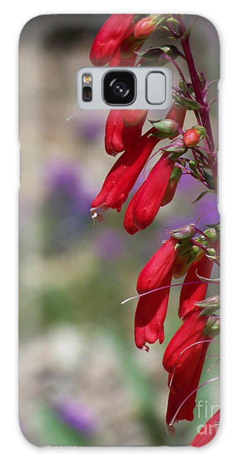 Flowers Galaxy Case featuring the photograph Penstemon by Kathy McClure