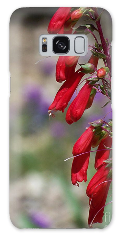 Flowers Galaxy S8 Case featuring the photograph Penstemon by Kathy McClure