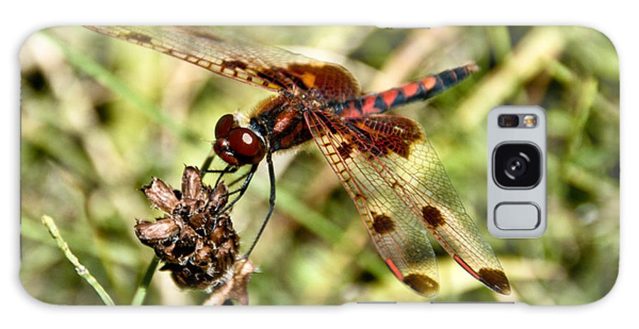 Dragonfly Galaxy S8 Case featuring the photograph Perched Dragon by Cheryl Baxter