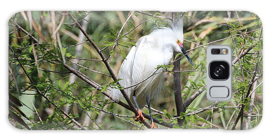Egret Galaxy S8 Case featuring the photograph Perched Egret by MaryAnn Barry