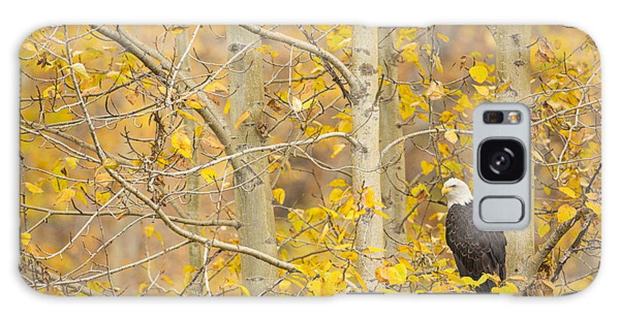 Adult Galaxy S8 Case featuring the photograph Perched In The Colors Of Autumn by Tim Grams