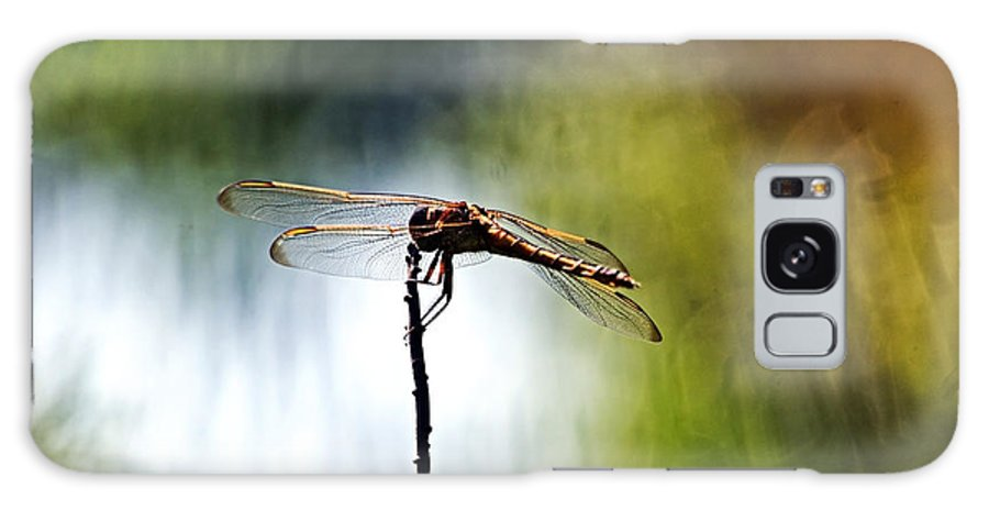 Dragonfly Galaxy S8 Case featuring the photograph Perching Dragonfly by Theo OConnor
