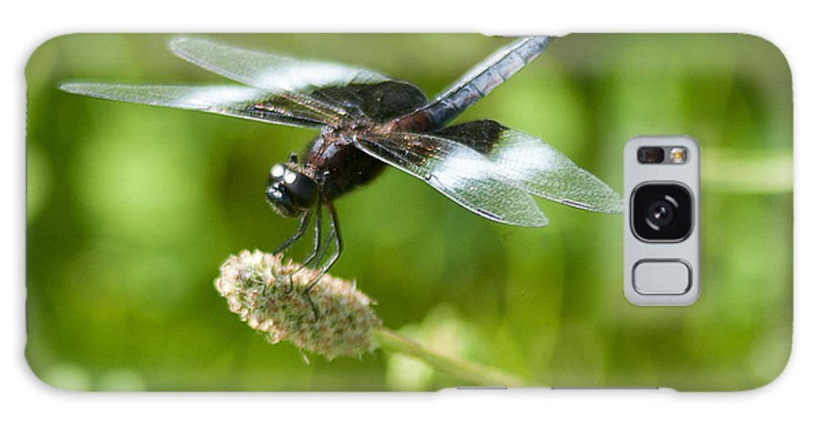 Widow Skimmer Galaxy S8 Case featuring the photograph Perching Widow Skimmer by Kathryn Whitaker
