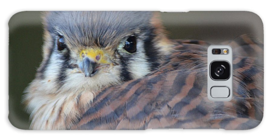 Falcon Galaxy S8 Case featuring the photograph Peregrine Falcon by Maggy Marsh