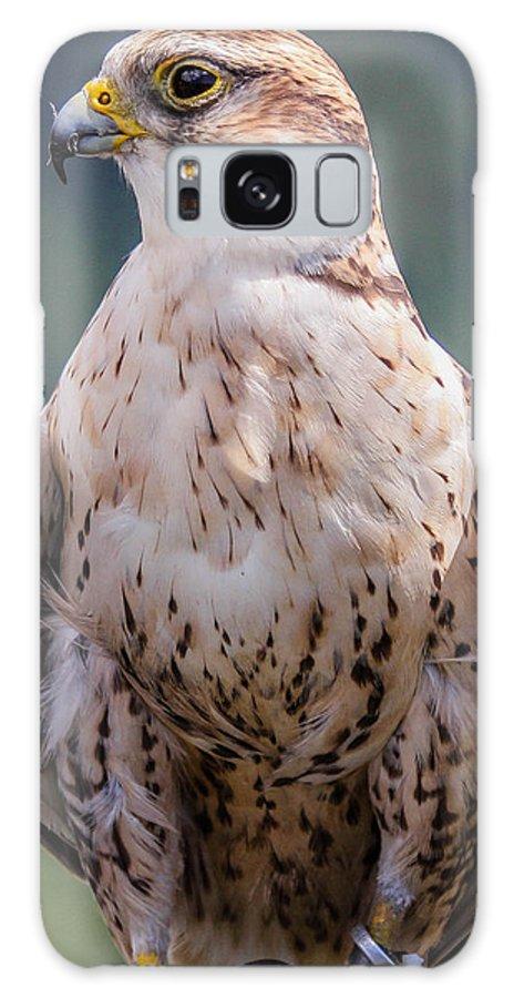 peregrine Falcon Bird Eagle Birding Galaxy S8 Case featuring the photograph Peregrine Falcon by Marie Cardona