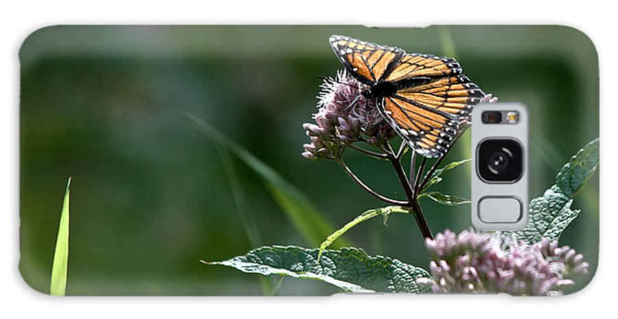 Monarch Galaxy S8 Case featuring the photograph Perfect Monarch by Cheryl Baxter