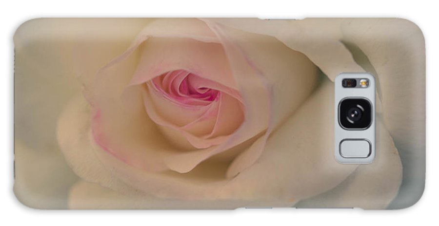 white Rose perfect Rose dreamy Rose wedding Rose Galaxy S8 Case featuring the photograph Perfection by Cathy Donohoue