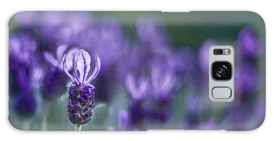 Lavender Galaxy S8 Case featuring the photograph Perfume Of Summer by Maria Ismanah Schulze-Vorberg