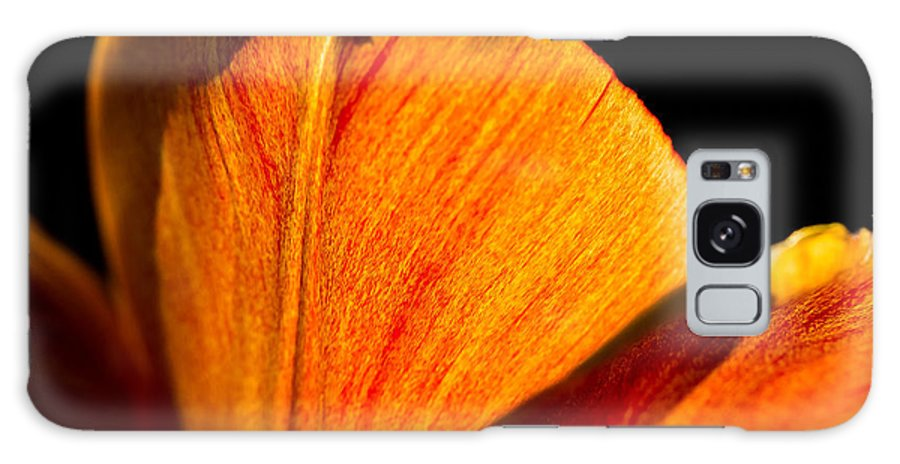 Bloom Galaxy S8 Case featuring the photograph Petals And Sun by Gaurav Singh