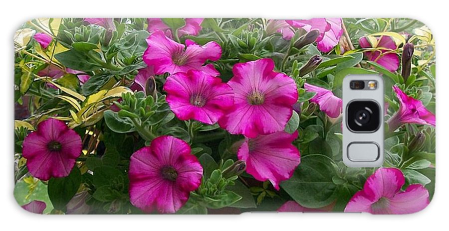 Group Galaxy S8 Case featuring the photograph Petunia Basket by Sharon Duguay