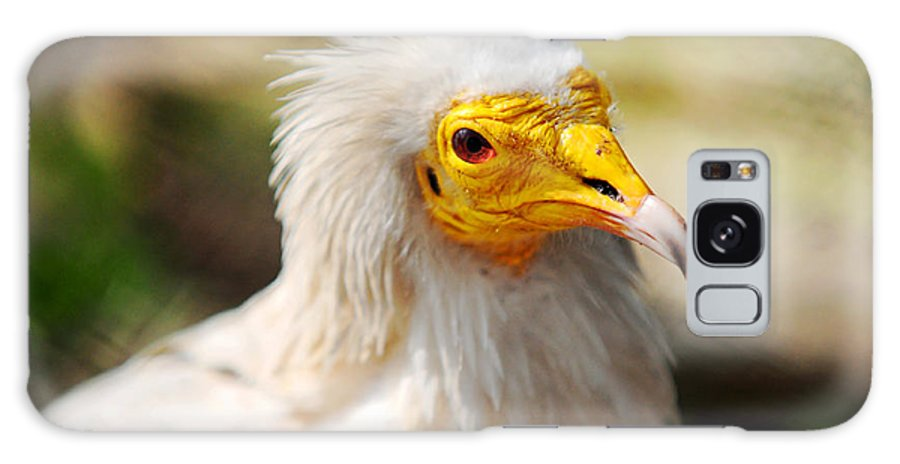 Bird Galaxy S8 Case featuring the photograph Pharaoh Chicken. Egyptian Vulture by Jenny Rainbow
