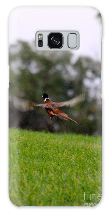 Pheasant Galaxy S8 Case featuring the photograph Pheasant Take Off by Krista Wimmer