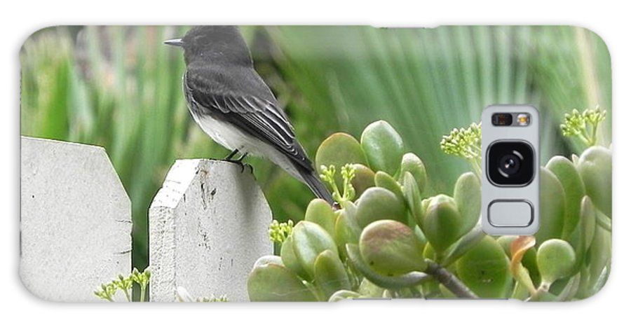 Black Phoebe Galaxy S8 Case featuring the photograph Phoebe In The Rain by Janine Berry