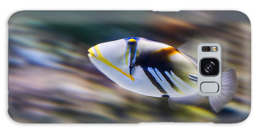 Rhinecanthus Aculeatus Galaxy S8 Case featuring the photograph Picasso - Lagoon Triggerfish Rhinecanthus Aculeatus by Jamie Pham