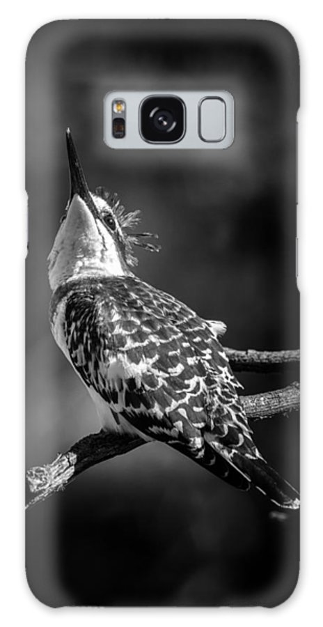 Bird Galaxy S8 Case featuring the photograph Pied Kingfisher by David Van der Want