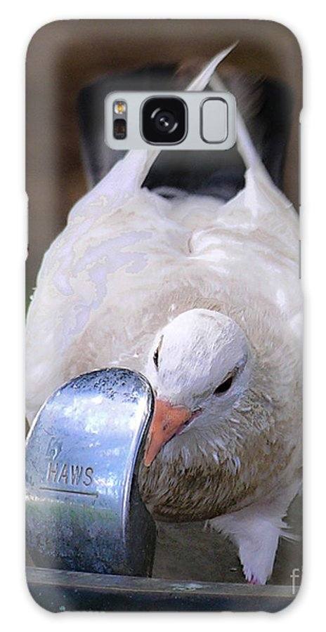 Birds Galaxy S8 Case featuring the photograph Pigeon by Christy Lang