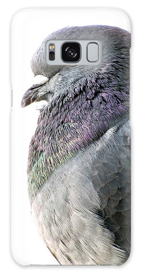Pigeon Galaxy S8 Case featuring the photograph Pigeon Portrait by Jennifer Wheatley Wolf