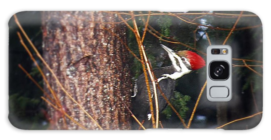 Galaxy S8 Case featuring the photograph Pileated Woodpecker by MTBobbins Photography