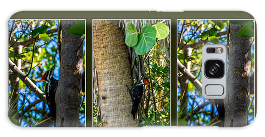 Woodpecker Galaxy S8 Case featuring the photograph Pileated Woodpecker by Nancy L Marshall