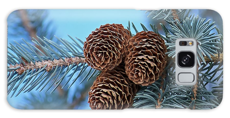 Christmas Galaxy S8 Case featuring the photograph Pine Cones by Ernie Echols