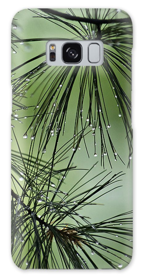 Pine Needles Galaxy S8 Case featuring the photograph Pine Droplets by Judy Johnson