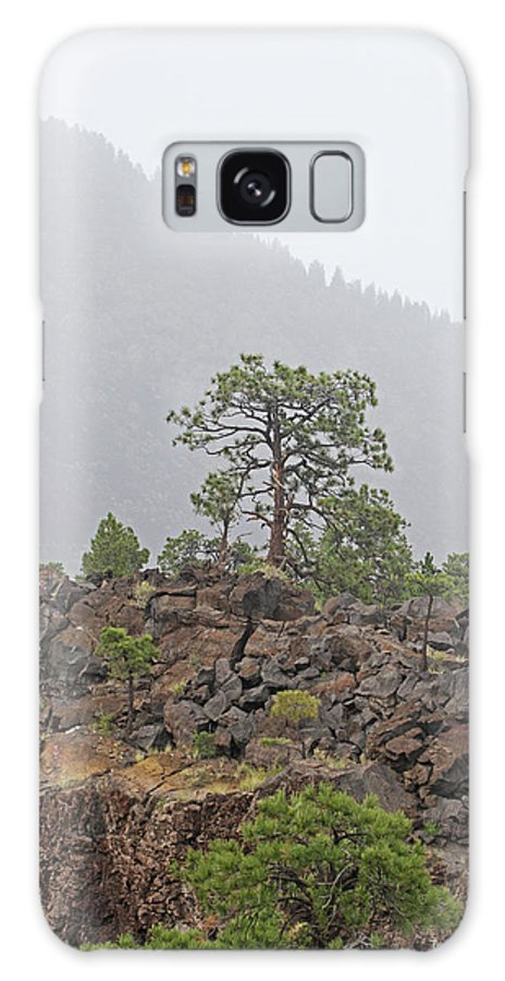 Pine On Lava Galaxy S8 Case featuring the photograph Pine On Lava by Tom Janca