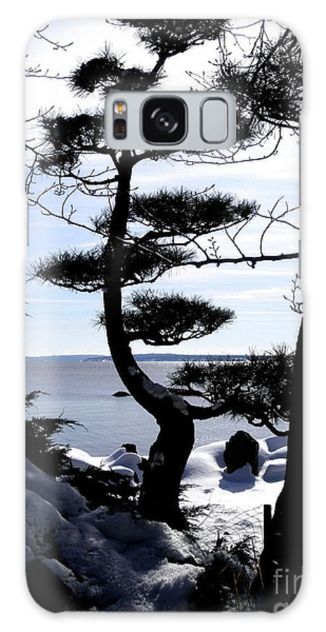 Dlgerring Galaxy S8 Case featuring the photograph Pine Tree Silhouette by D L Gerring
