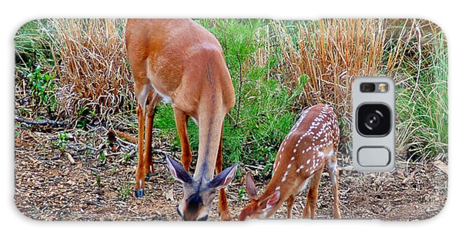 Deer Galaxy S8 Case featuring the photograph Piney Mountain Doe And Fawn by Jeff McJunkin