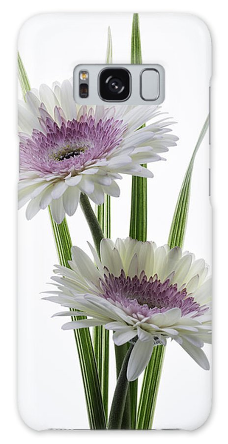 Gerbera Galaxy S8 Case featuring the photograph Pink And White Gerbera by Kim Aston