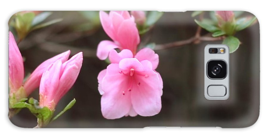Cathy Lindsey Galaxy S8 Case featuring the photograph Pink Azalea by Cathy Lindsey