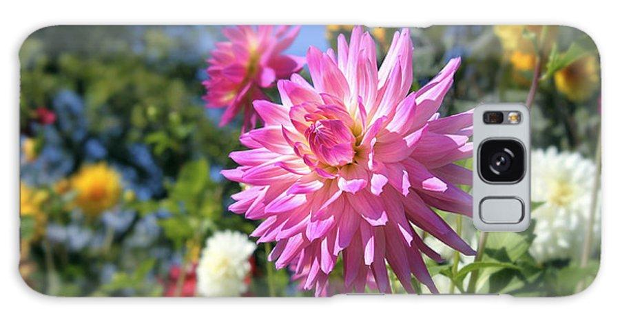 Dahlia Galaxy S8 Case featuring the photograph Pink Dahlia Flower Closeup by Jit Lim