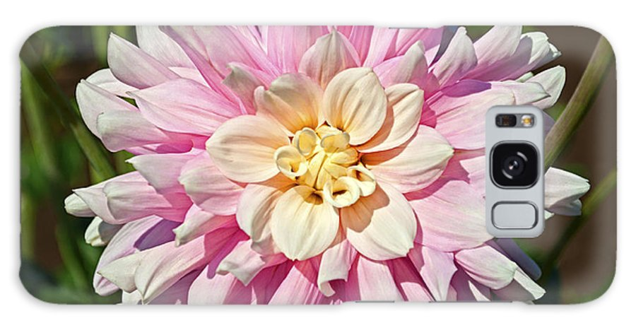 Pink Dahlia Flower Galaxy S8 Case featuring the photograph Pink Dahlia Flower by Thomas J Rhodes
