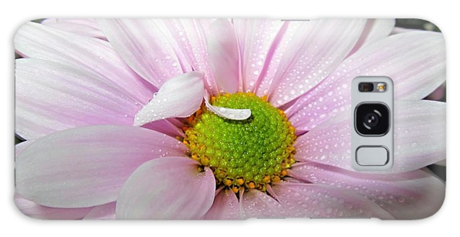 Danielle Parent Galaxy S8 Case featuring the photograph Pink Daisy Freshness With Water Droplets by Danielle Parent
