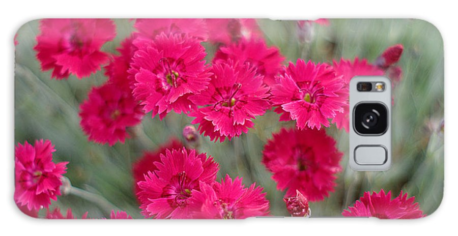 Pink Galaxy S8 Case featuring the photograph Pink Dianthus Flowers by Suzanne Powers