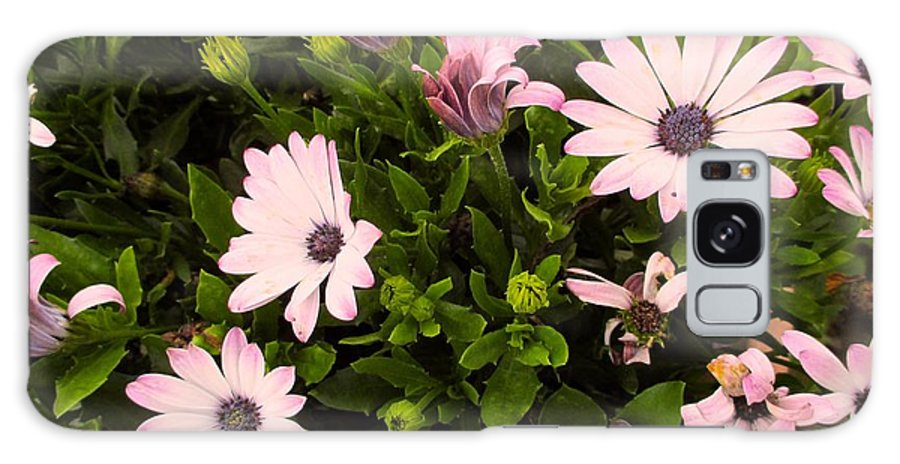 Pink Galaxy S8 Case featuring the photograph Pink Edge by Kendall Kessler
